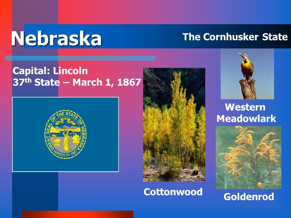 Montana Capital: Helena 41 st State- November 8, 1889 Western Meadowlark Ponderosa Pine Bitterroot The Treasure State