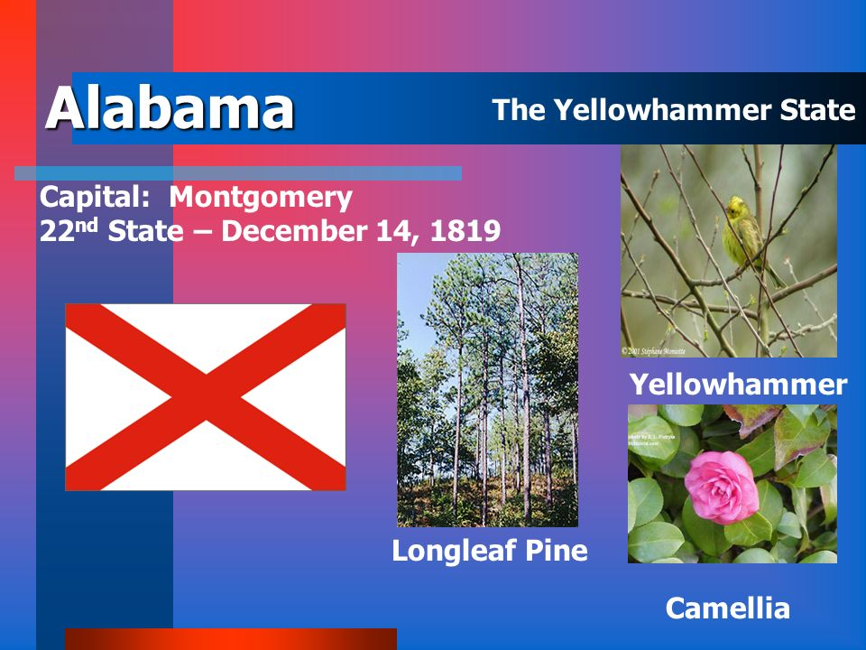 Users can navigate through the slide show in alphabetical order of the state by clicking on each screen. Users can click on the individual state abbre