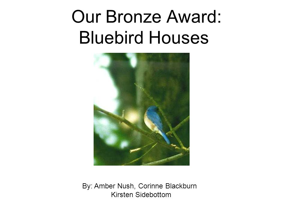 Our Bronze Award: Bluebird Houses By: Amber Nush, Corinne Blackburn Kirsten Sidebottom