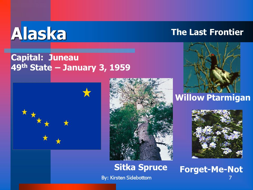 By: Kirsten Sidebottom7 Alaska Capital: Juneau 49 th State – January 3, 1959 Willow Ptarmigan Sitka Spruce Forget-Me-Not The Last Frontier