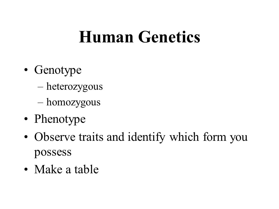 Human Genetics Genotype –heterozygous –homozygous Phenotype Observe traits and identify which form you possess Make a table