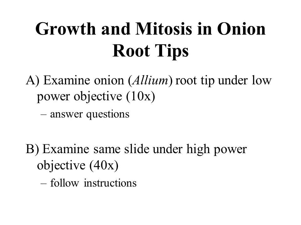 Growth and Mitosis in Onion Root Tips A) Examine onion (Allium) root tip under low power objective (10x) –answer questions B) Examine same slide under