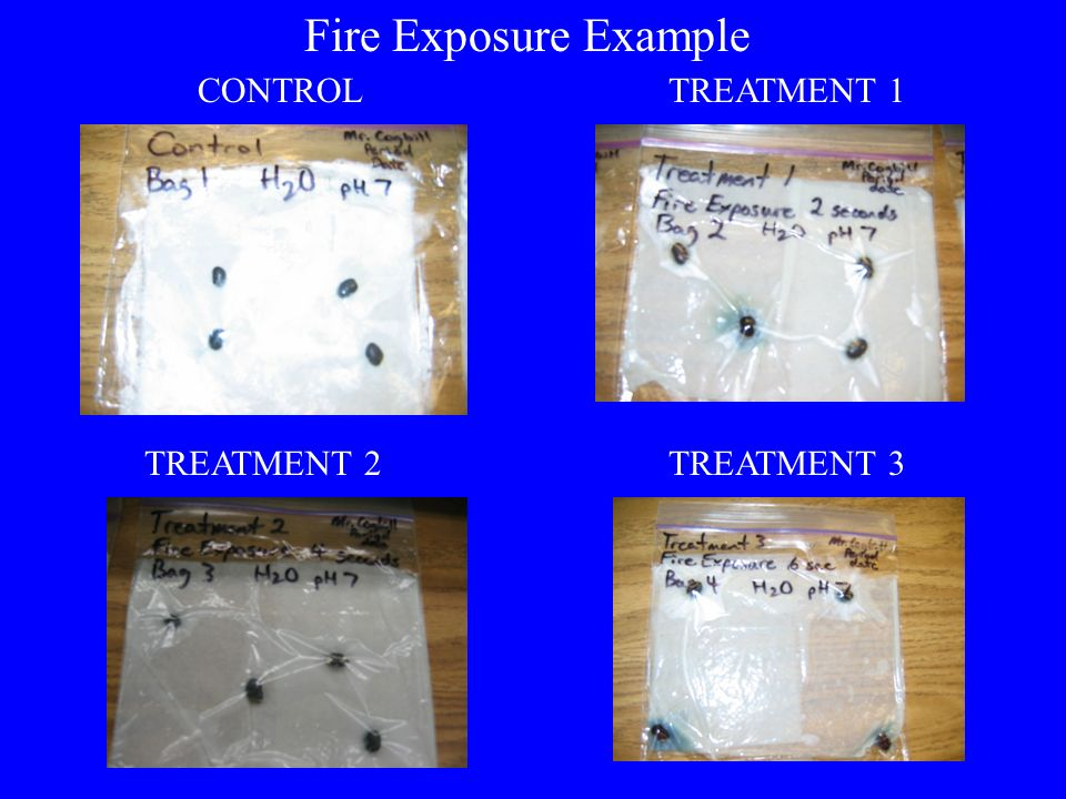 CONTROLTREATMENT 1 TREATMENT 2TREATMENT 3 Fire Exposure Example