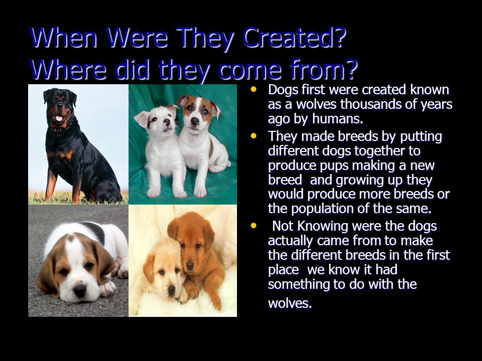 When Were They Created.Where did they come from.