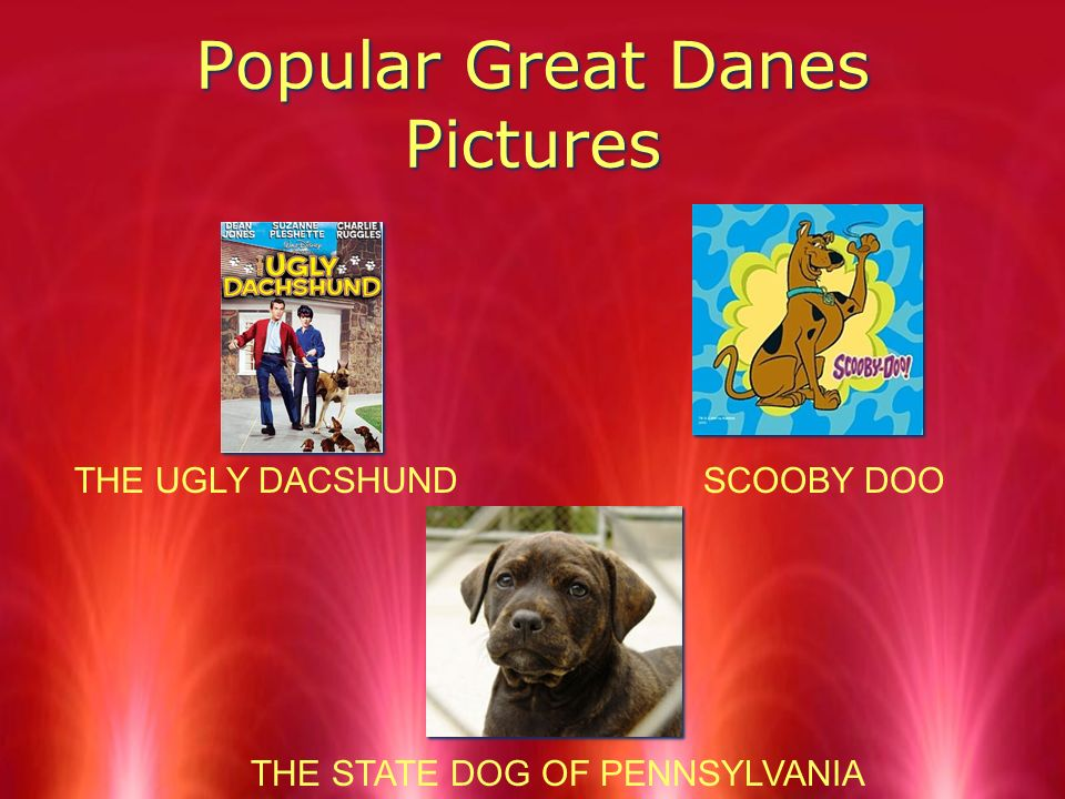 Popular Great Danes In 1965, Great Danes was named state dog of Pennsylvania because the Great Dane was recognizing the loyal devotion of all Pennsylvania dogs…...