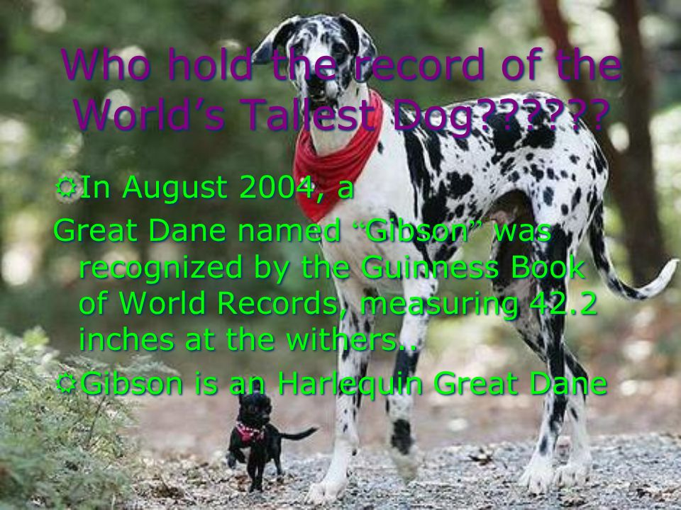 Who hold the record of the Worlds Tallest Dog?????.