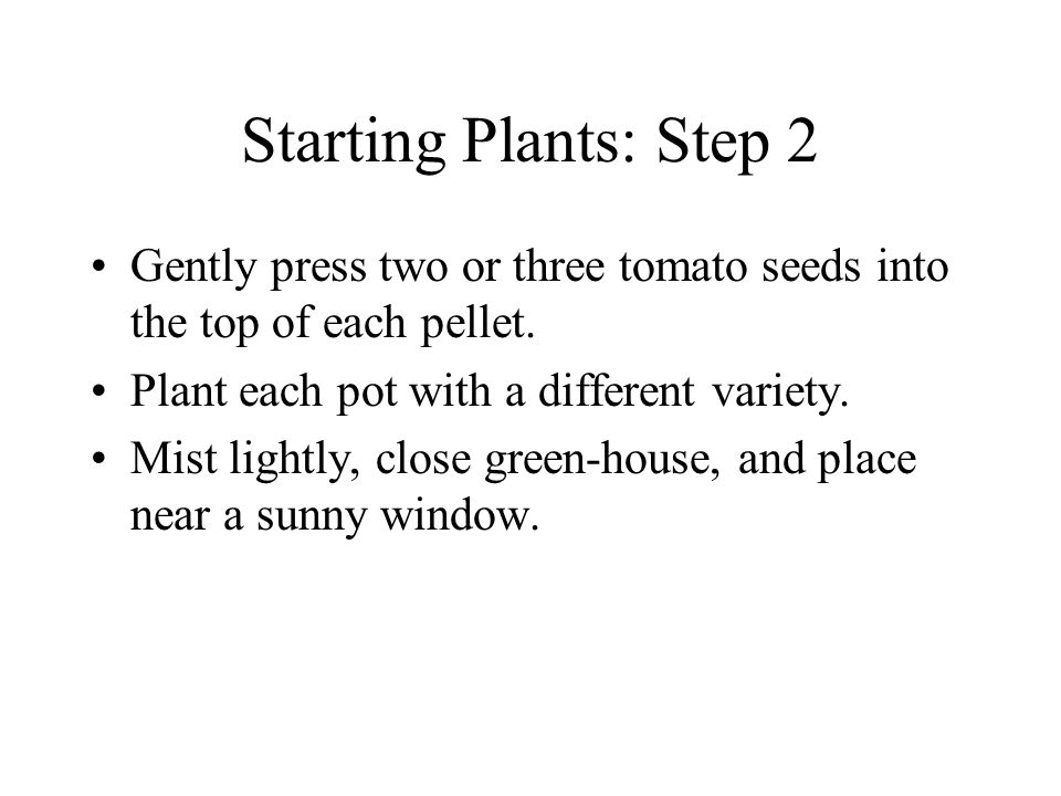 Starting Plants: Step 2 Gently press two or three tomato seeds into the top of each pellet.
