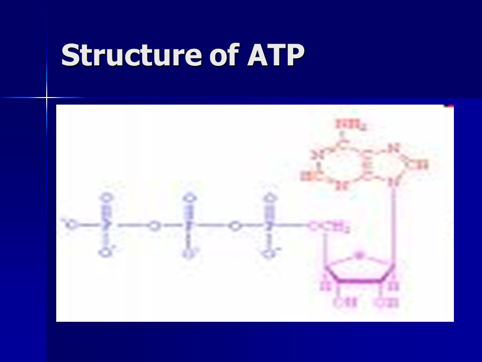 Adenosine Triphosphate (ATP) The common energy currency of cells, when cells require energy, they spend ATP The common energy currency of cells, when