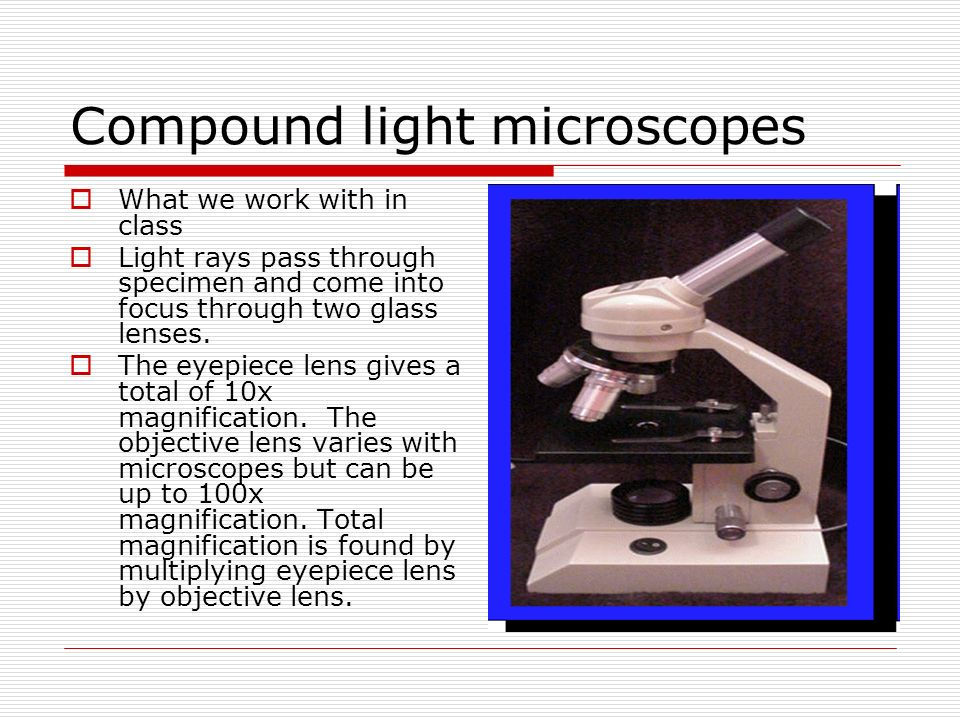 Compound light microscopes What we work with in class Light rays pass through specimen and come into focus through two glass lenses. The eyepiece lens
