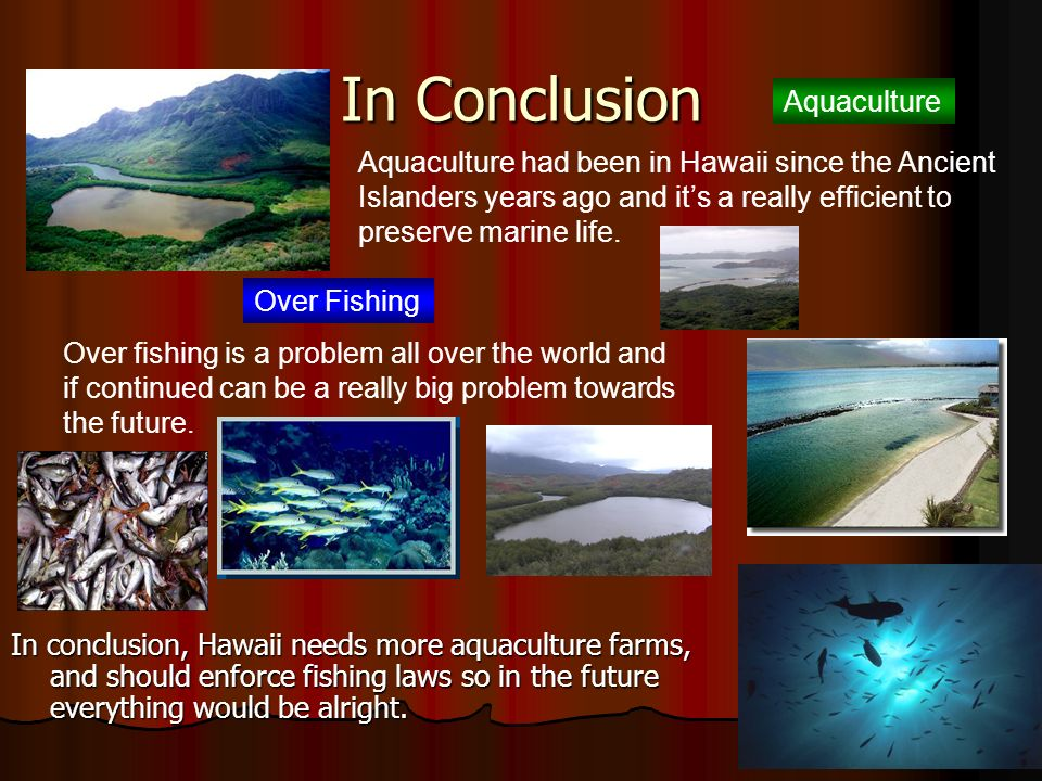 What Is The Difference of The Hawaiian Methods of Catching Fish Comparing To Todays? The ancient Hawaiian islanders were very resourceful because they