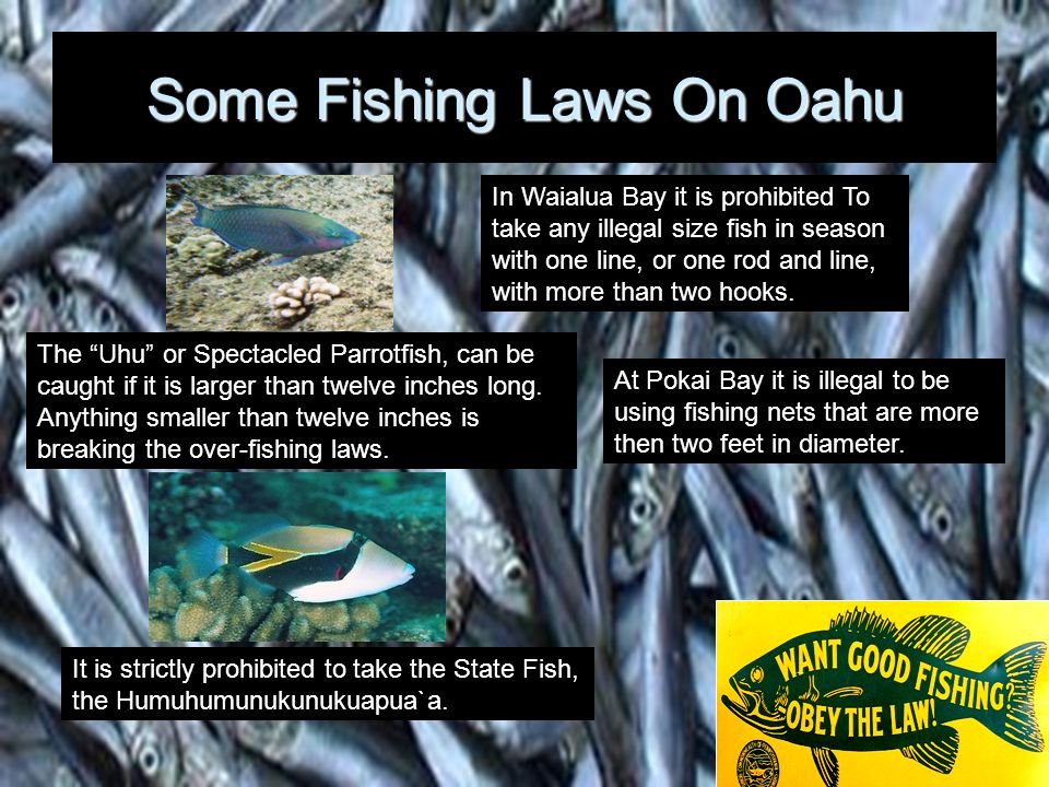 Fishing… Over The Limit, Under The Fish Population Satisfaction Drastic fishing in the United States, especially in Hawaii, has caused many species of