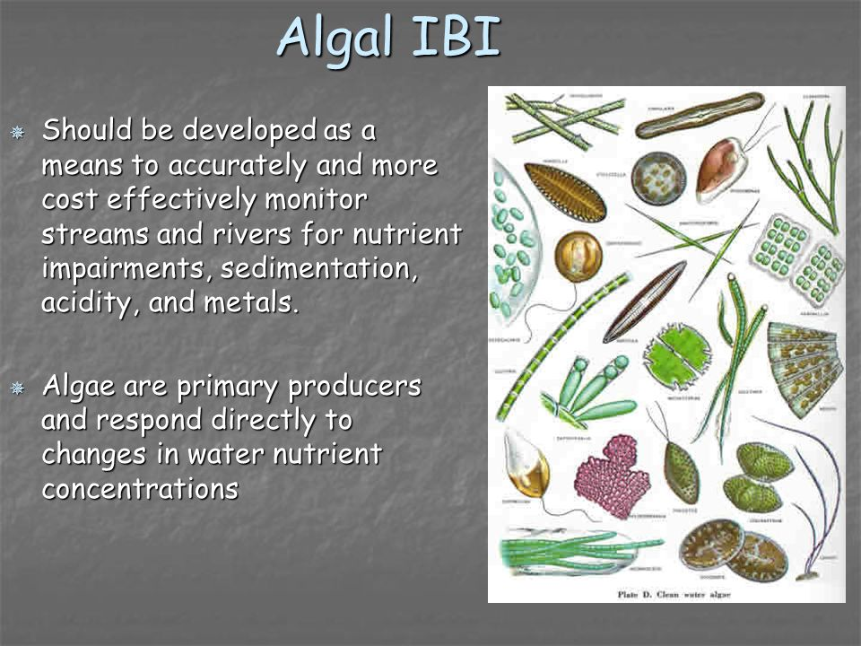 Algal IBI Should be developed as a means to accurately and more cost effectively monitor streams and rivers for nutrient impairments, sedimentation, a