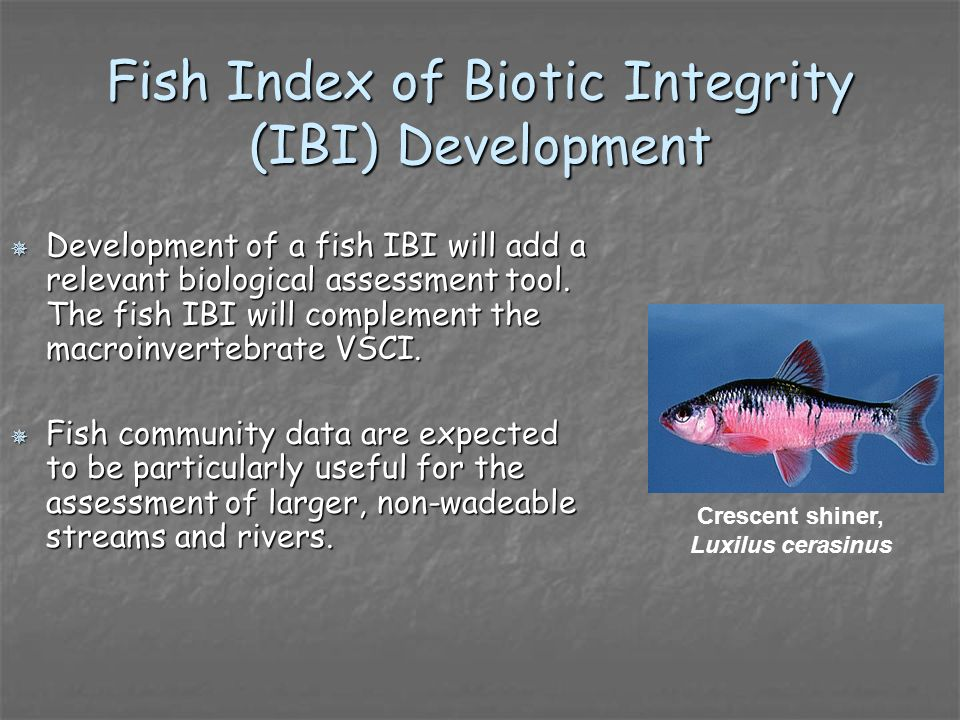 Fish Index of Biotic Integrity (IBI) Development Development of a fish IBI will add a relevant biological assessment tool.