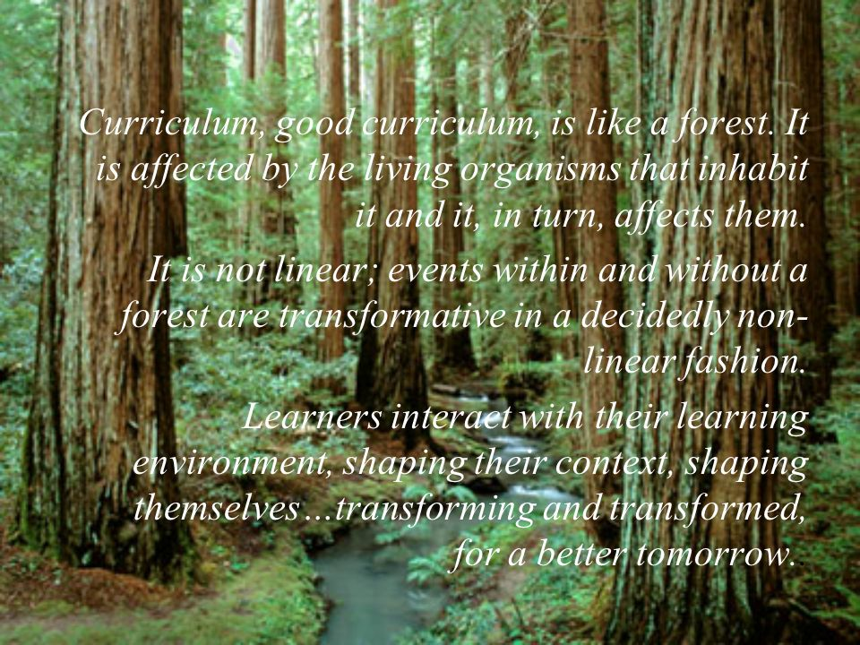 Curriculum, good curriculum, is like a forest.
