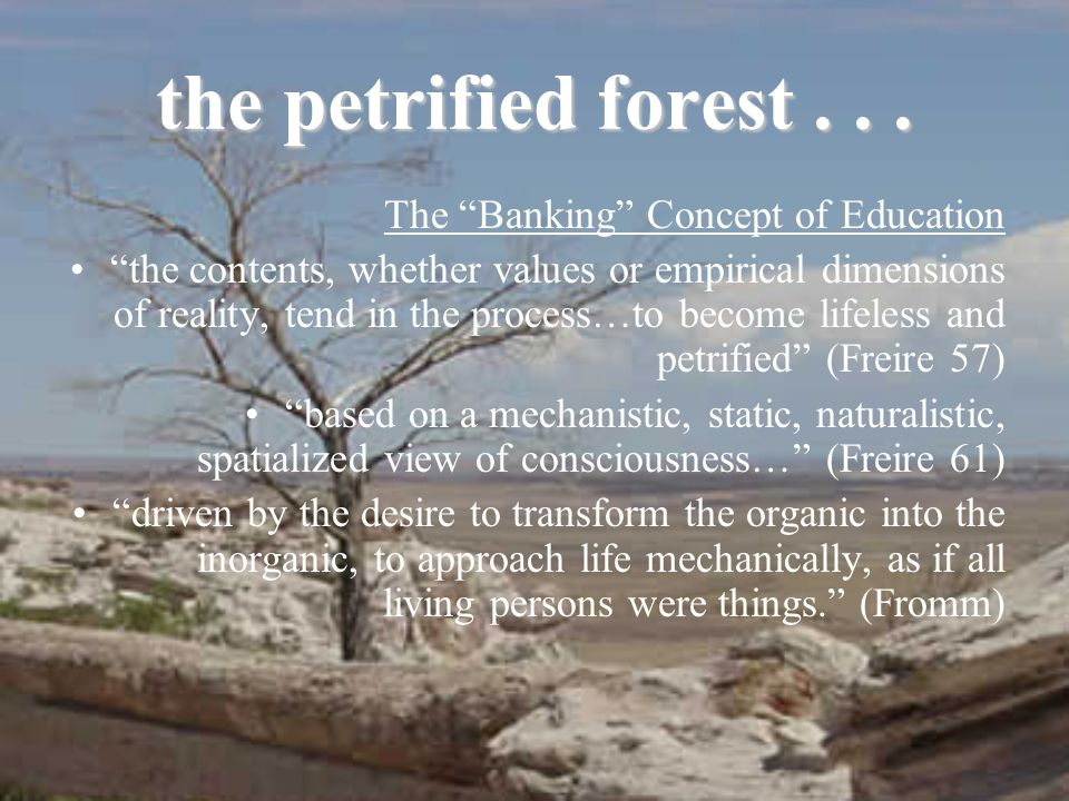 the petrified forest...