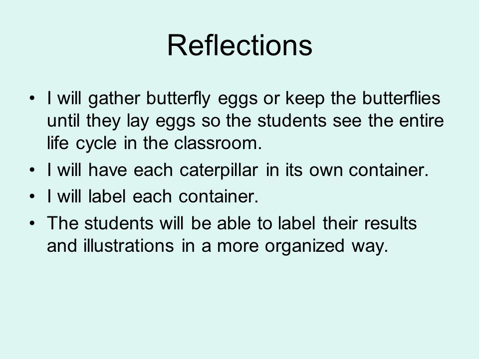 Reflections I will gather butterfly eggs or keep the butterflies until they lay eggs so the students see the entire life cycle in the classroom. I wil