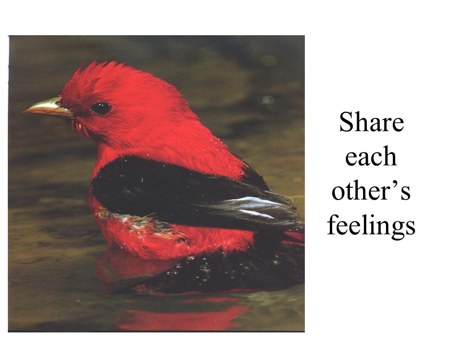 Share each others feelings