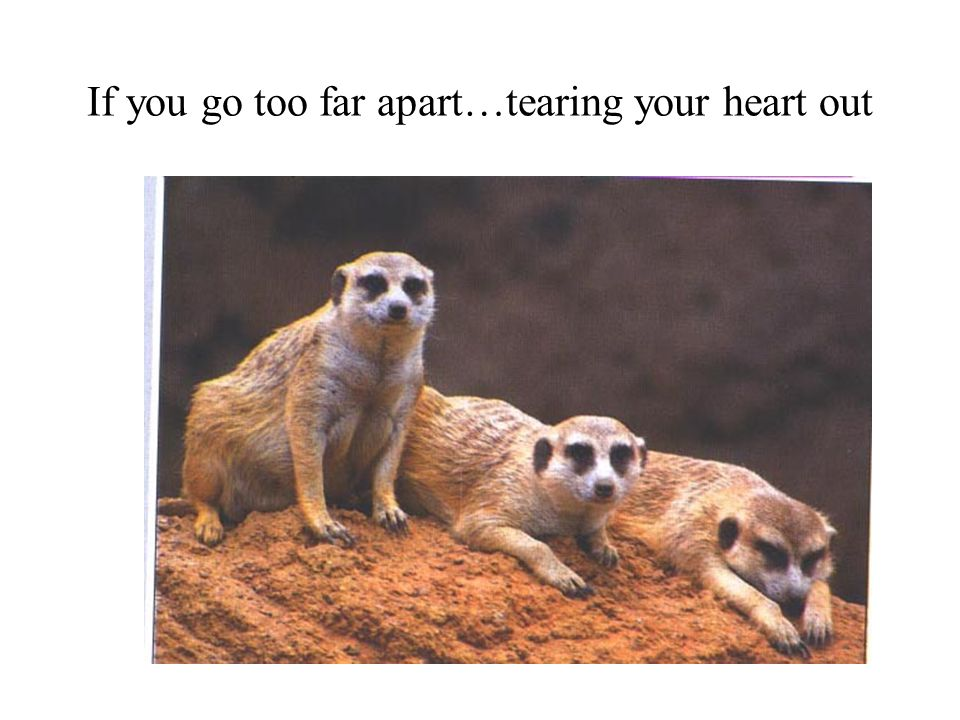 If you go too far apart…tearing your heart out