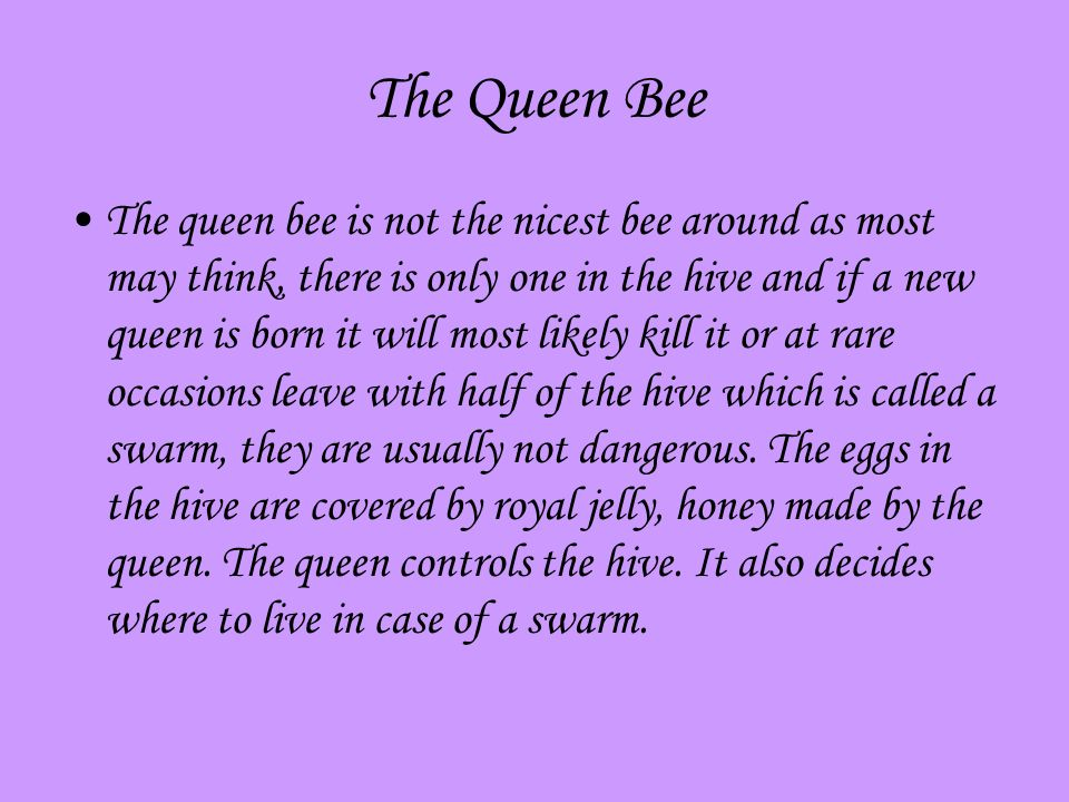 The Queen Bee The queen bee is not the nicest bee around as most may think, there is only one in the hive and if a new queen is born it will most likely kill it or at rare occasions leave with half of the hive which is called a swarm, they are usually not dangerous.