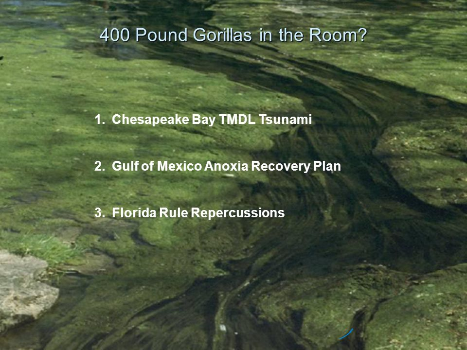 400 Pound Gorillas in the Room? 1.Chesapeake Bay TMDL Tsunami 2.Gulf of Mexico Anoxia Recovery Plan 3.Florida Rule Repercussions