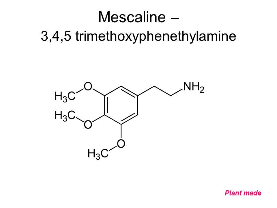 Mescaline – 3,4,5 trimethoxyphenethylamine Plant made