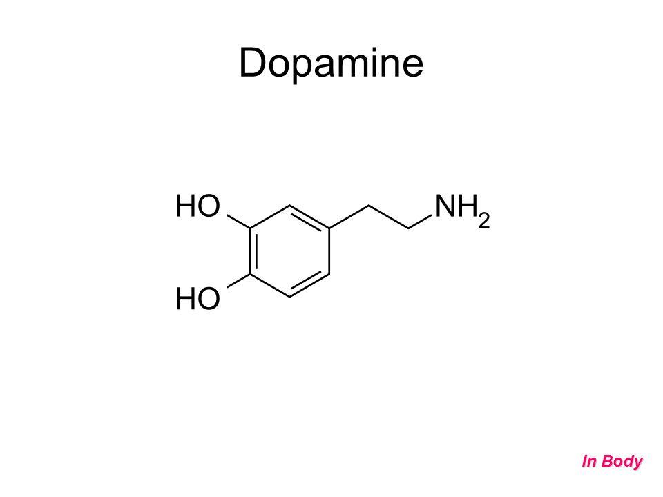 Dopamine In Body