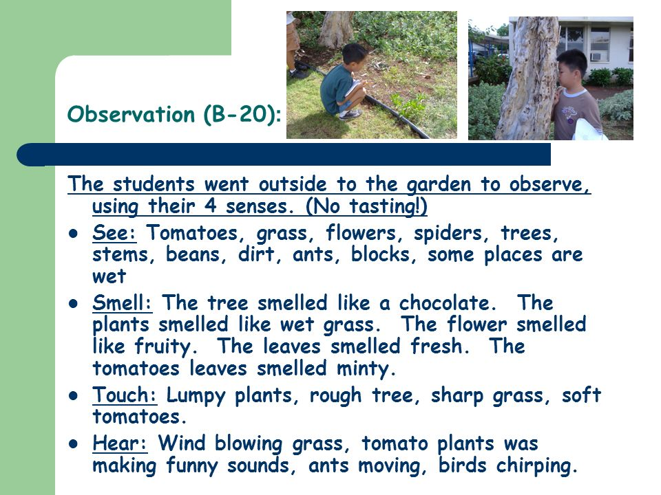 Observation (B-20) : The students went outside to the garden to observe, using their 4 senses.