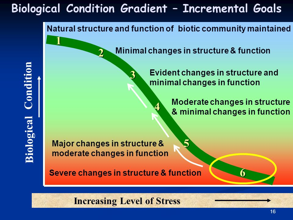 16 Biological Condition Biological Condition Gradient – Incremental Goals Increasing Level of Stress Natural structure and function of biotic community maintained Minimal changes in structure & function Evident changes in structure and minimal changes in function Moderate changes in structure & minimal changes in function Major changes in structure & moderate changes in function Severe changes in structure & function 1 2 3 4 5 6
