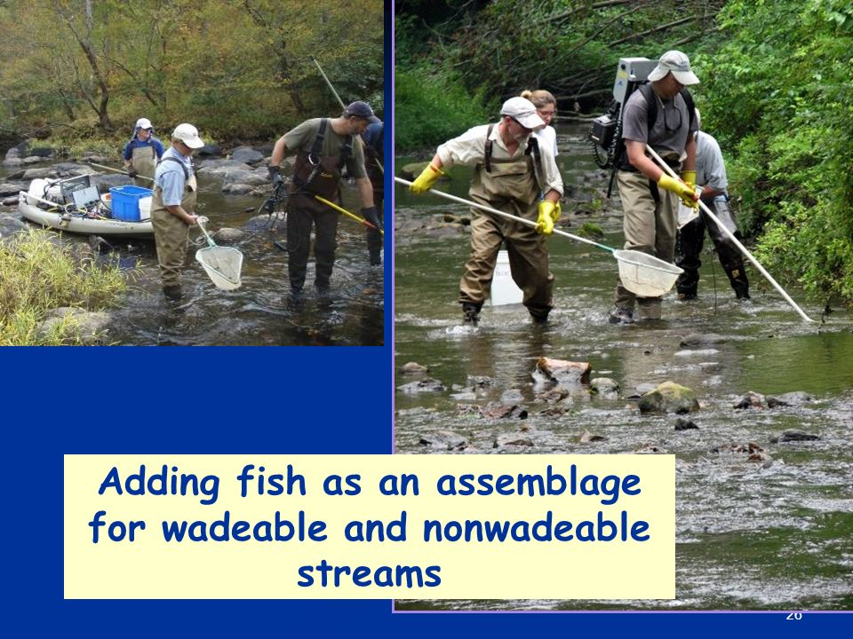 26 Adding fish as an assemblage for wadeable and nonwadeable streams