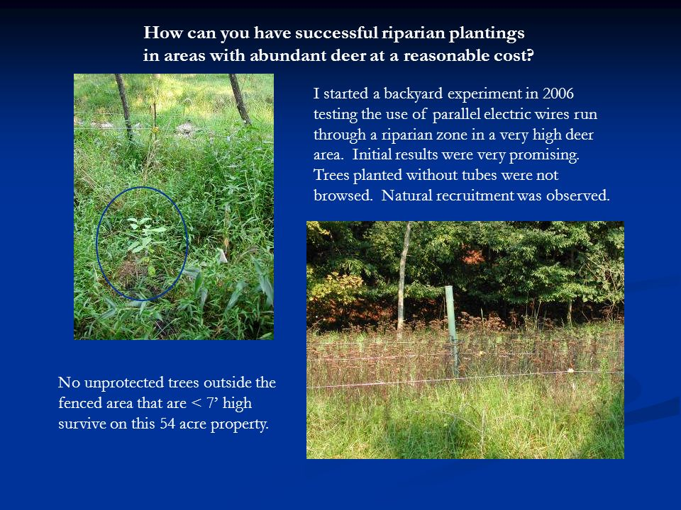 How can you have successful riparian plantings in areas with abundant deer at a reasonable cost.