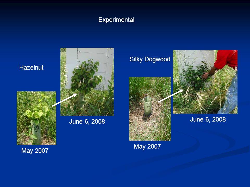 May 2007 June 6, 2008 May 2007 June 6, 2008 Hazelnut Silky Dogwood Experimental