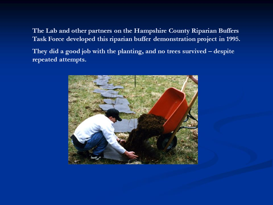 The Lab and other partners on the Hampshire County Riparian Buffers Task Force developed this riparian buffer demonstration project in 1995.