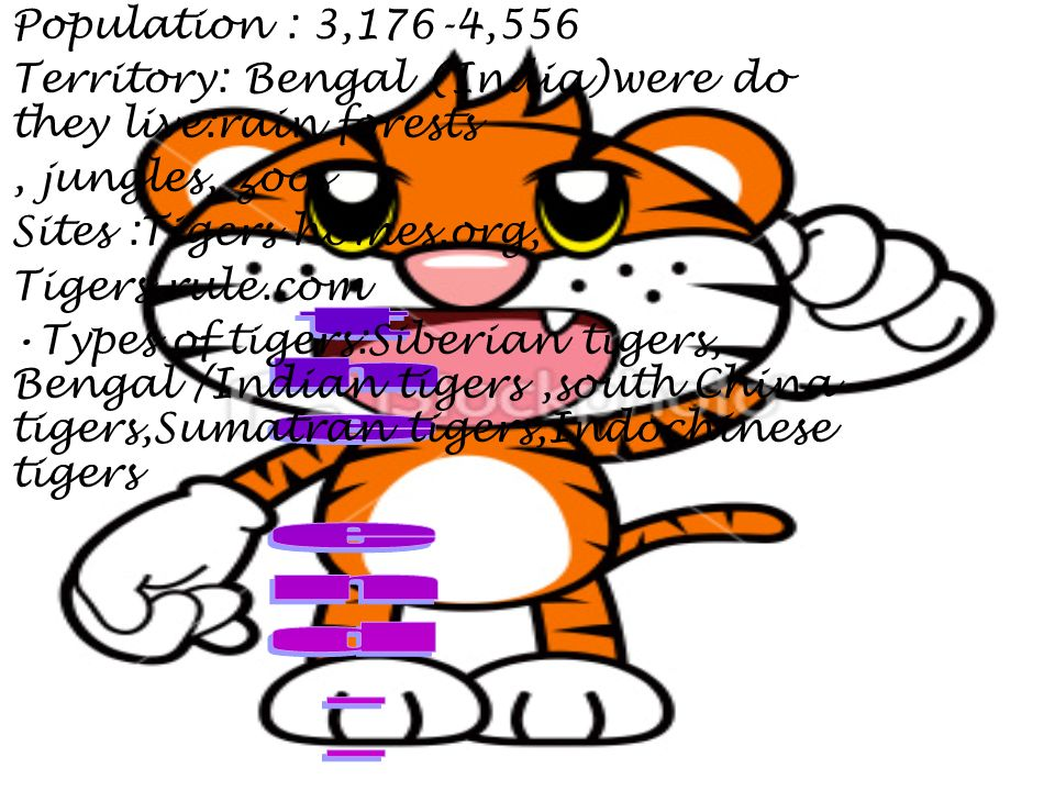 Population : 3,176-4,556 Territory: Bengal (India)were do they live:rain forests, jungles, zoos Sites :Tigers homes.org, Tigers rule.com Types of tigers:Siberian tigers, Bengal /Indian tigers,south China tigers,Sumatran tigers,Indochinese tigers