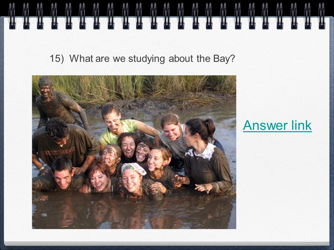 15) What are we studying about the Bay Answer link