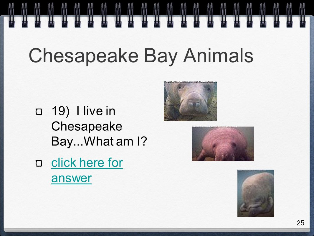 Chesapeake Bay Animals 19) I live in Chesapeake Bay...What am I click here for answer 25
