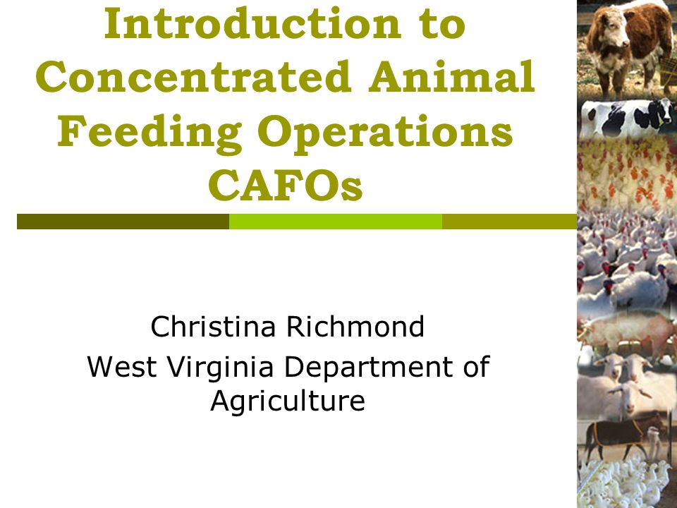 Introduction to Concentrated Animal Feeding Operations CAFOs Christina Richmond West Virginia Department of Agriculture