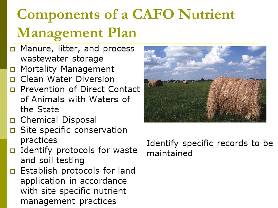 Components of a CAFO Nutrient Management Plan Manure, litter, and process wastewater storage Mortality Management Clean Water Diversion Prevention of Direct Contact of Animals with Waters of the State Chemical Disposal Site specific conservation practices Identify protocols for waste and soil testing Establish protocols for land application in accordance with site specific nutrient management practices Identify specific records to be maintained