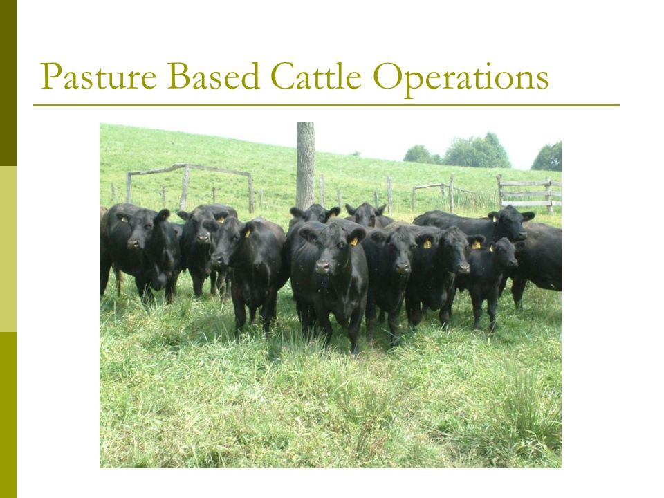 Pasture Based Cattle Operations