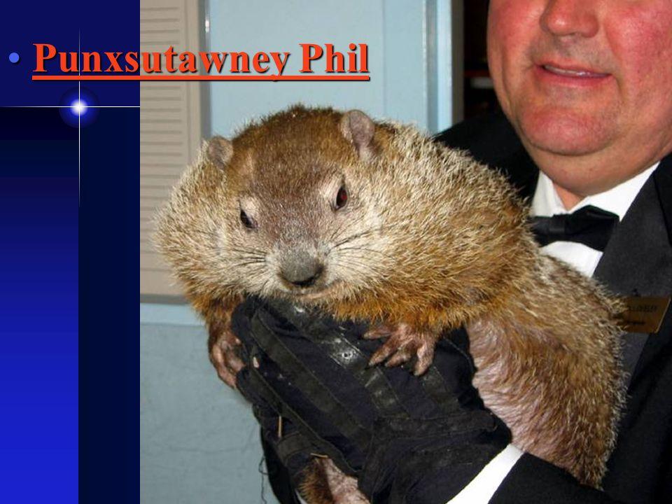 Punxsutawney PhilPunxsutawney PhilPunxsutawney PhilPunxsutawney Phil