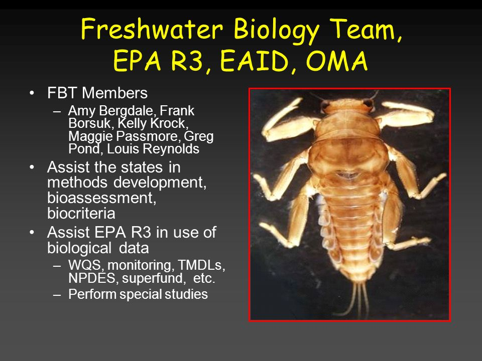 Freshwater Biology Team, EPA R3, EAID, OMA FBT Members –Amy Bergdale, Frank Borsuk, Kelly Krock, Maggie Passmore, Greg Pond, Louis Reynolds Assist the