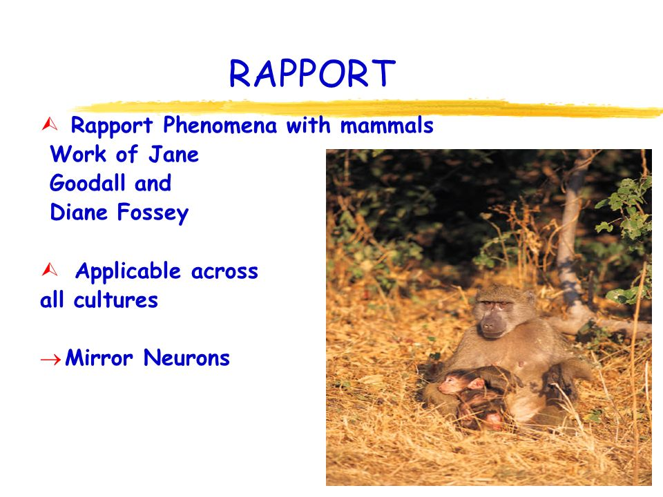 RAPPORT Ù Rapport Phenomena with mammals Work of Jane Goodall and Diane Fossey Ù Applicable across all cultures Mirror Neurons