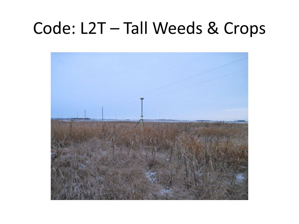 Code: L2T – Tall Weeds & Crops