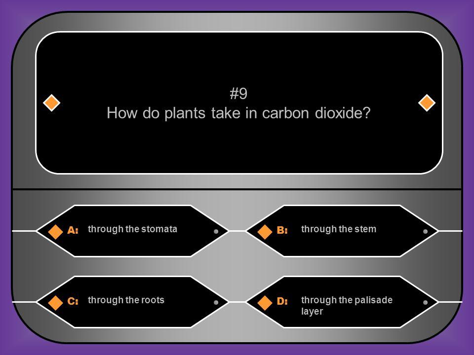 C. carbon dioxide