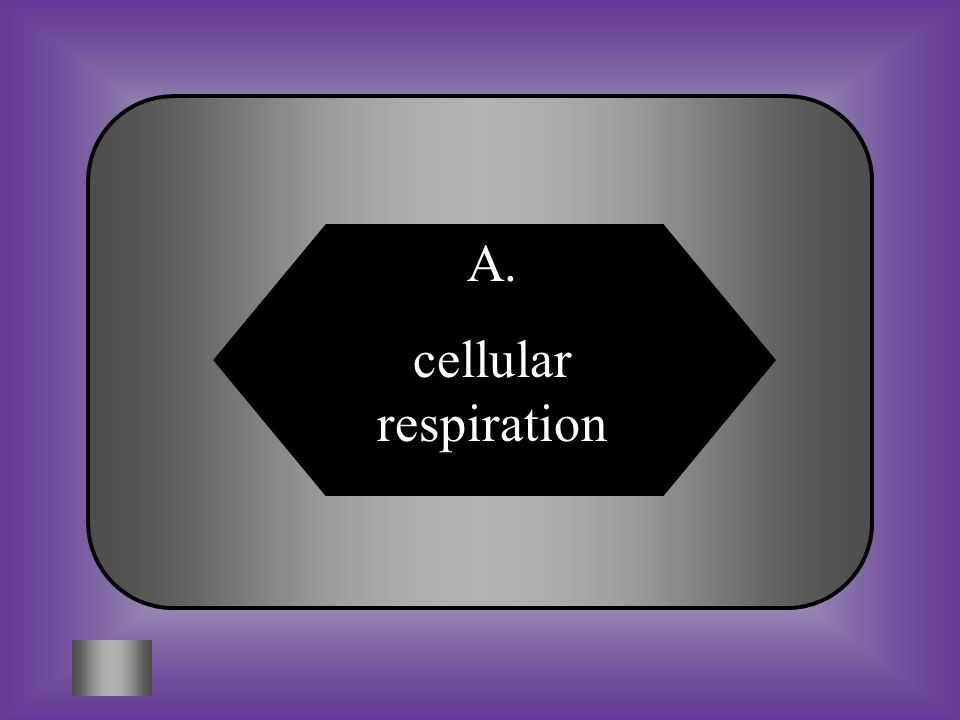 A:B: cellular respirationphotosynthesis #12 How do plants release energy for growth, repair, and reproduction.