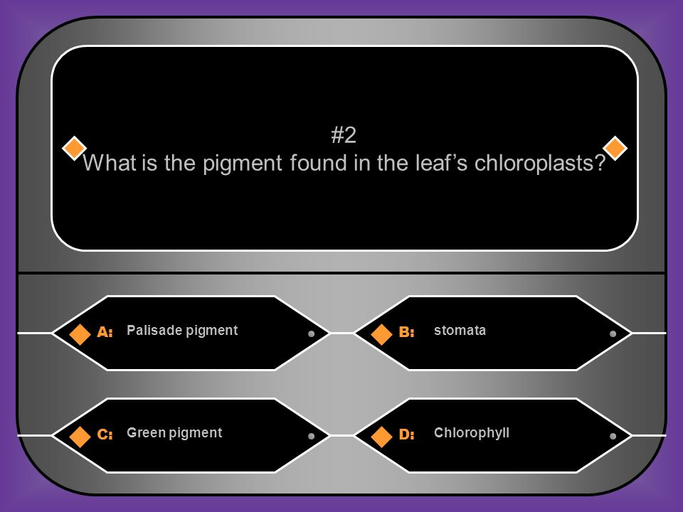 C. photosynthesis