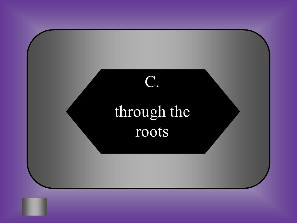 A:B: through the guard cells through the stomata #4 How does water enter the plant? C:D: through the rootsthrough the leaves