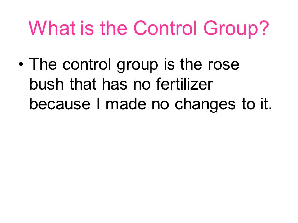What is the Control Group? The control group is the rose bush that has no fertilizer because I made no changes to it.
