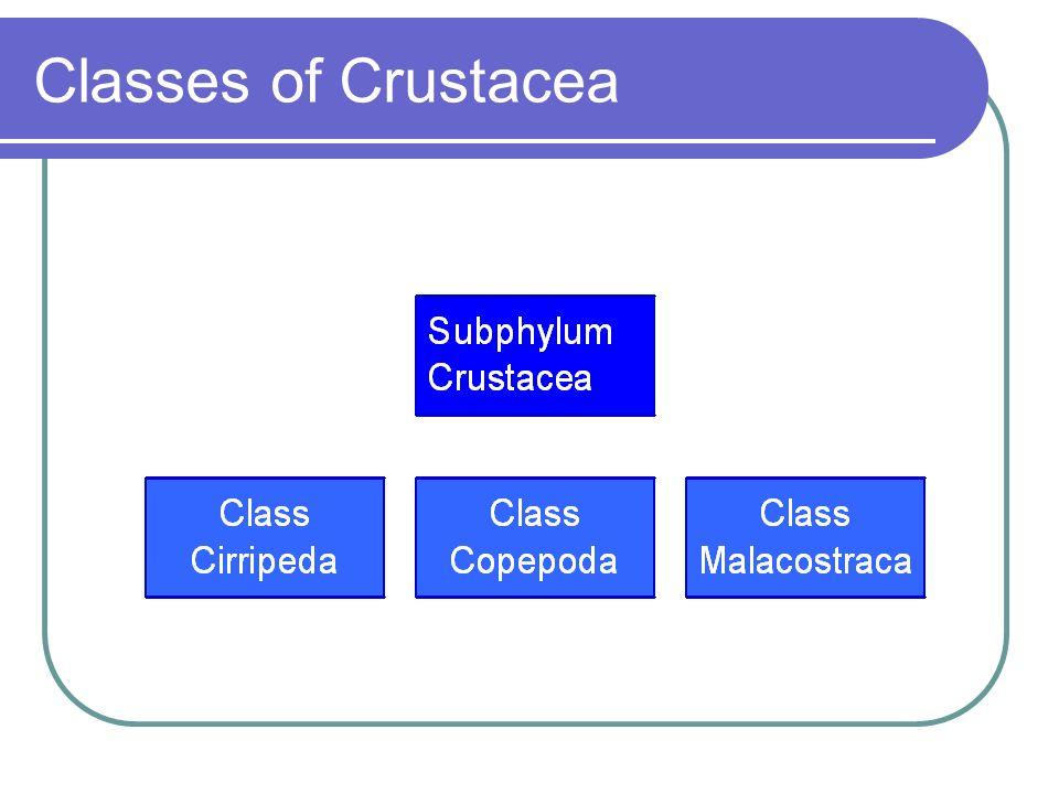 Classes of Crustacea