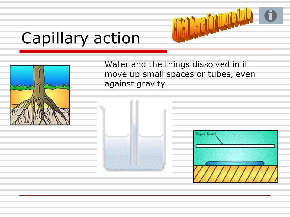 Capillary action Water and the things dissolved in it move up small spaces or tubes, even against gravity