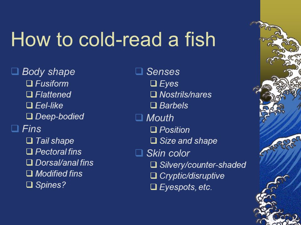 How to cold-read a fish Body shape Fusiform Flattened Eel-like Deep-bodied Fins Tail shape Pectoral fins Dorsal/anal fins Modified fins Spines? Senses